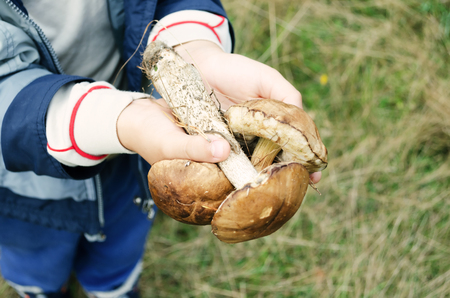 Child with mushrooms in the hands of a pine forest