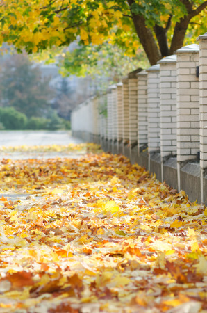 Fallen leaves on the track in the park