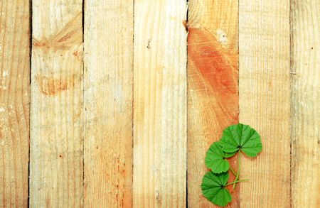 Leaves flowers on wooden boards Stock Photo
