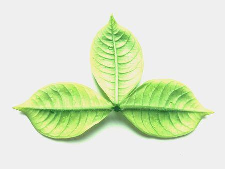 Designedly leaves