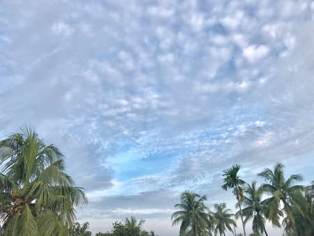 overcast: A beautiful natural scenery  with sky and trees Stock Photo