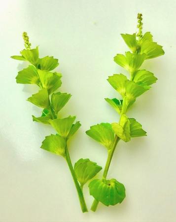 A beautiful design made with foliage