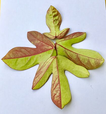 A beautiful design made with colourful leaves