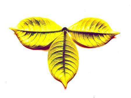 A beautiful logotype leafy design Stock Photo