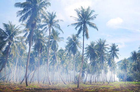 Palm forest in the jungle of koh tao in the gulf of thailand photo