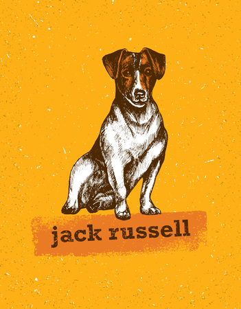 Jack Russell Terrier. Illustration of a dog. Stock Photo