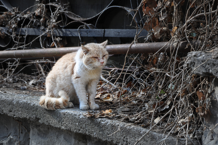 Battered dirty homeless cat sitting on the street in high quality Stok Fotoğraf