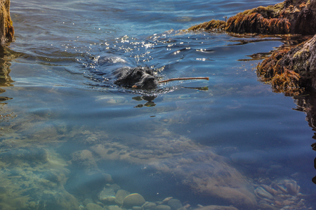 dog swimming in the sea with a stick on a sunny day in high quality