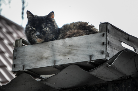 dirty homeless cat sitting in the box on the roof in high quality