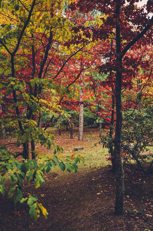 colorful autumn trees shot on vintage film in high quality Stok Fotoğraf