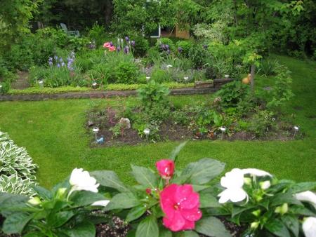 hostas: Garden
