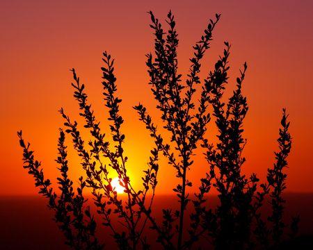 Sunset 版權商用圖片