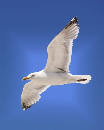 A seagull soars in the summer sky