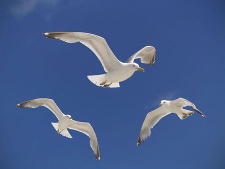Drie meeuwen hover over een strand in de zomer hemel