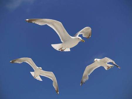hover: Three seagulls hover over a beach in the summer sky