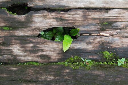 midst: Plant in the midst of wooden ground.