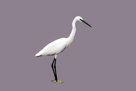 white bird: white bird