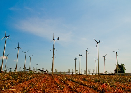 wind turbine in pipeapple field on petburi,Thailand