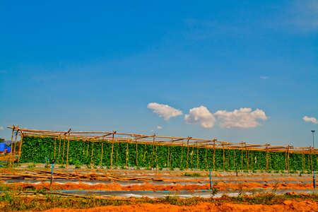 Blue sky on farmland, petburi ,Thailand Stock Photo
