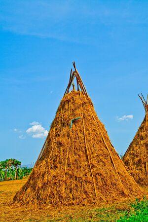 Straw with blue sky on the farm Stock Photo