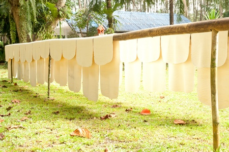 rubber sheet: raw rubber are drying on rack