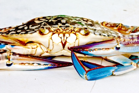 some kind of sea crab in thailand photo