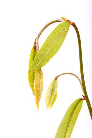 softness: beauty of the top  softness plant Stock Photo