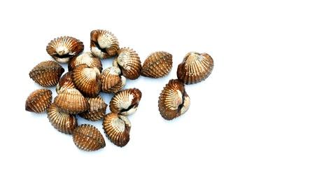cockles: cockles  seashells on whitebackground