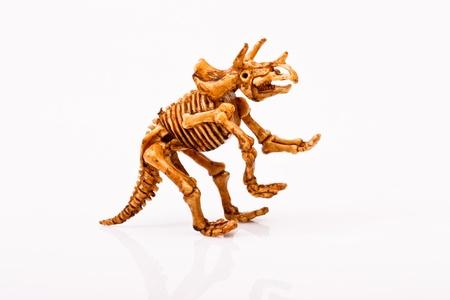 dinosaur skeleton  on white background Stock Photo - 17367762