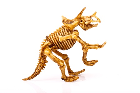 dinosaur skeleton  on white background