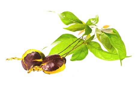 seeding: seeding in isolated on white  background Stock Photo