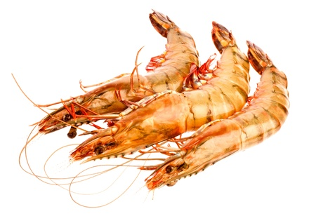 raw shrimps in isolated on whitebackground 写真素材