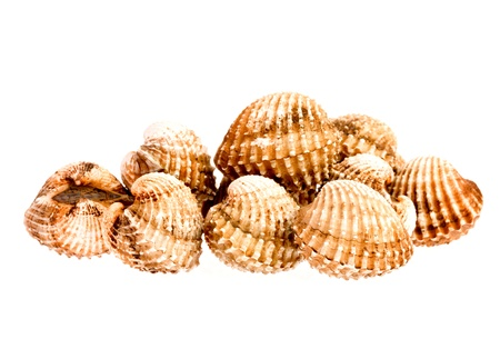 cockles in isolated on whitebackground