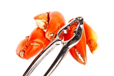 claws of crab    in isolated on white background photo