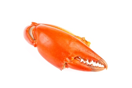 claw of crab in isolated on white background