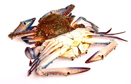 Blue crab in isolated on white background Stock Photo