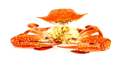 blue swimmer crab: Steamed Blue crab in isolated on white background