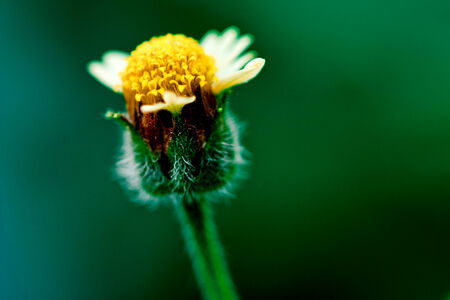 beautiful grass flowers in close up Stock Photo