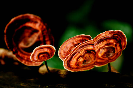 beautiful  mushroom forest in close up style , Kanjanaburi forest, Thailand 免版税图像 - 30214887