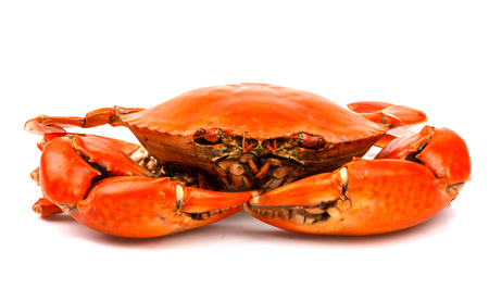 Steamed black crab in isolated on white background Stock Photo
