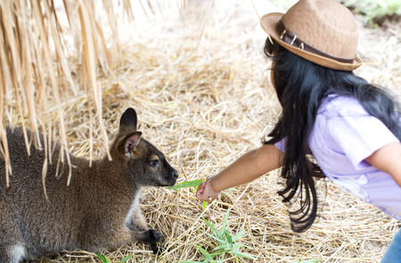 a gril is feed meal to wallaby kangaroo