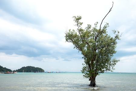 alone tree on sea beach at Krabi,Thailand