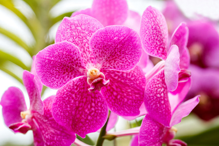 Beautiful bloom orchids at there tree 免版税图像