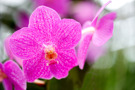Beautiful bloom orchids at there tree 免版税图像 - 110598631