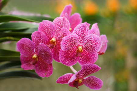 Beautiful bloom orchids at there tree 免版税图像 - 110598632