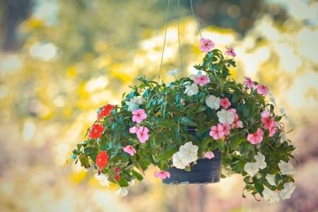 front porch: flores de colores colgando