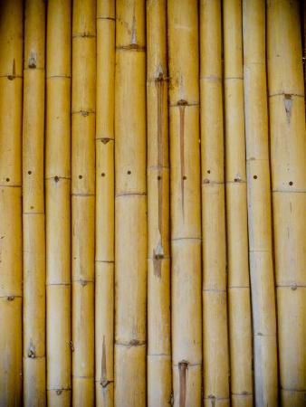 Bamboo wall Stock Photo - 18977139