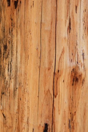 softwood: softwood pattern Stock Photo