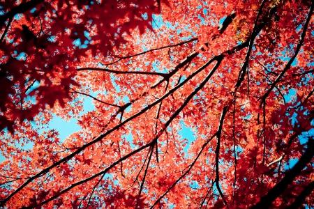 高尾山で秋の紅葉の近く東京, 日本