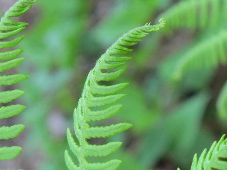 Closed up of fern photo